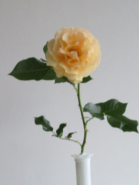 Julia Child 5A.jpg