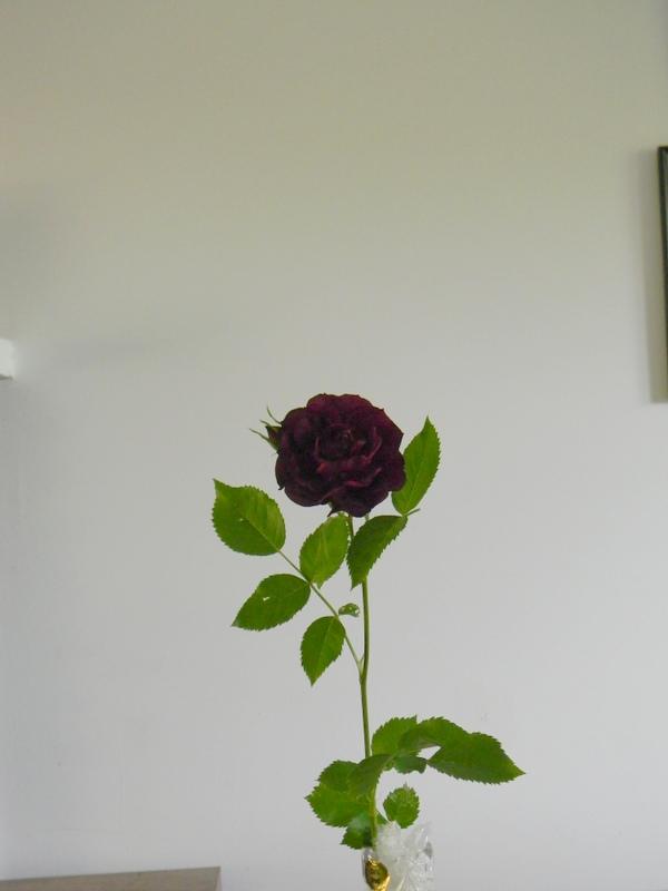 Violette A 10.JPG