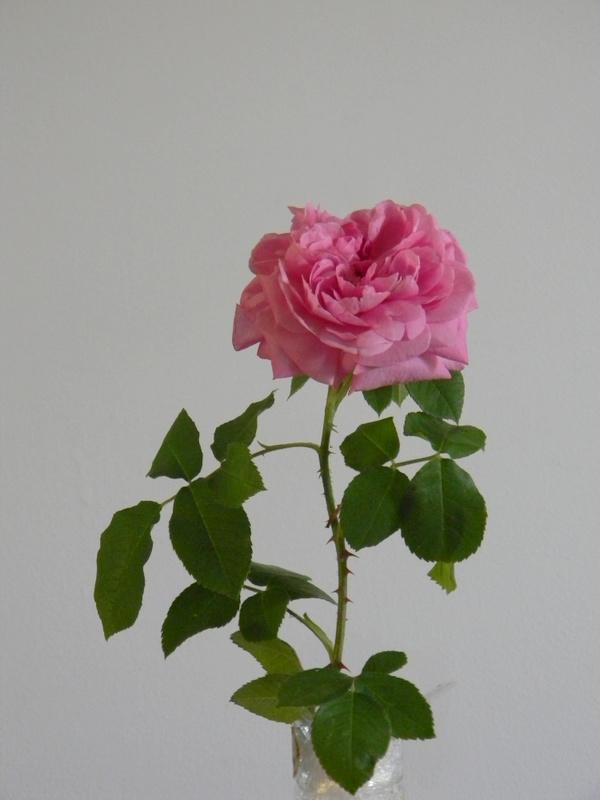 Gertrude Jekyll A 9.JPG