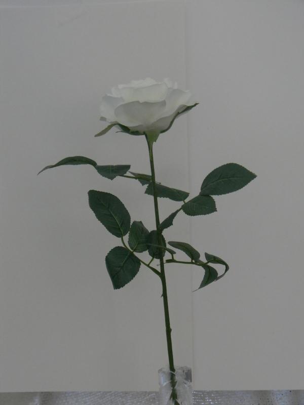 1 White Rose.JPG