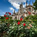 cathedral-roses.jpg